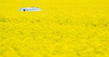 Car hiding in a field of flowers