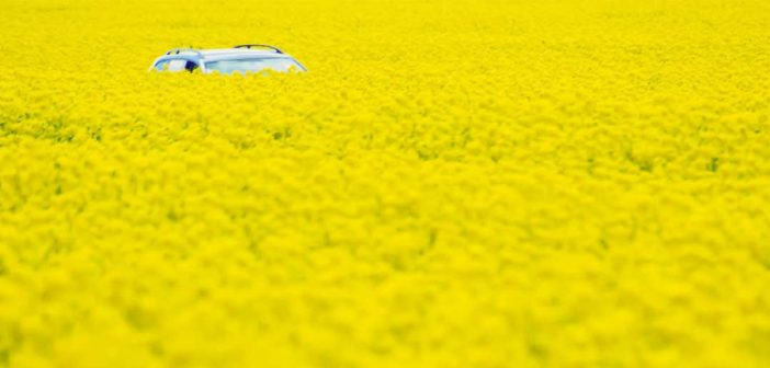 Car hiding in a field of flowers
