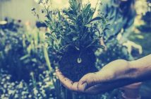 How to Start a Successful Gardening Business